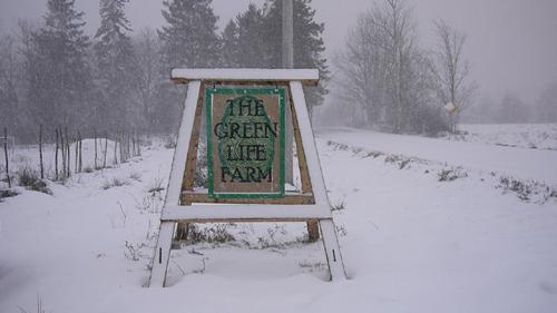 Thegreenlifefarm U0026 39 S Blog